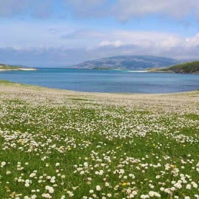 The Outer Hebrides are famous for the machair. Unique orchids, sundew and butterwort, and rare moss species.